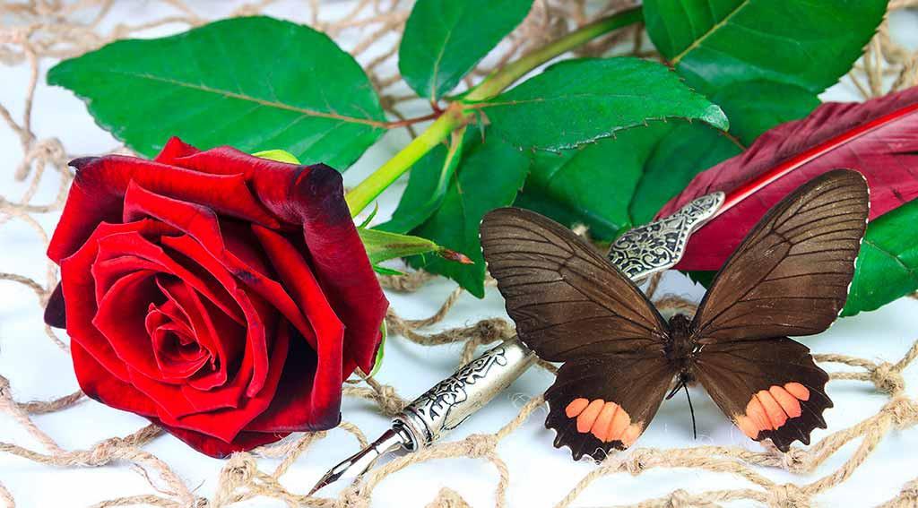 rote-rose-zum-muttertag